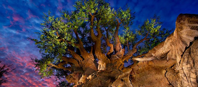 Disney Animal Kingdom Park